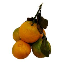 China Kumquat 1kg